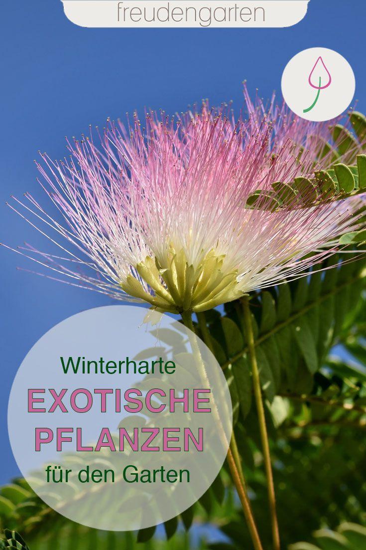 Exotische Pflanzen Im Garten In 2020 Exotische Pflanzen Winterharte Pflanzen Garten Pflanzen
