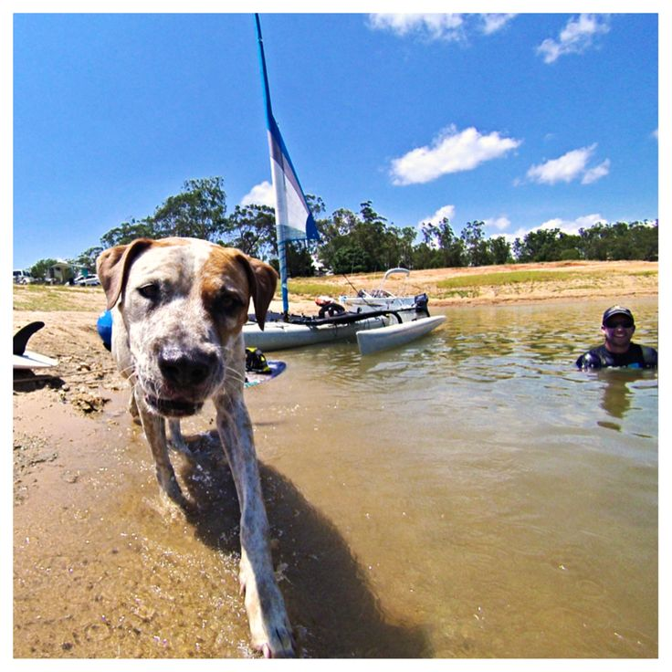 Holidays with Dogs – 5 reasons to visit the Cairns Tablelands #dogs #petfriendly