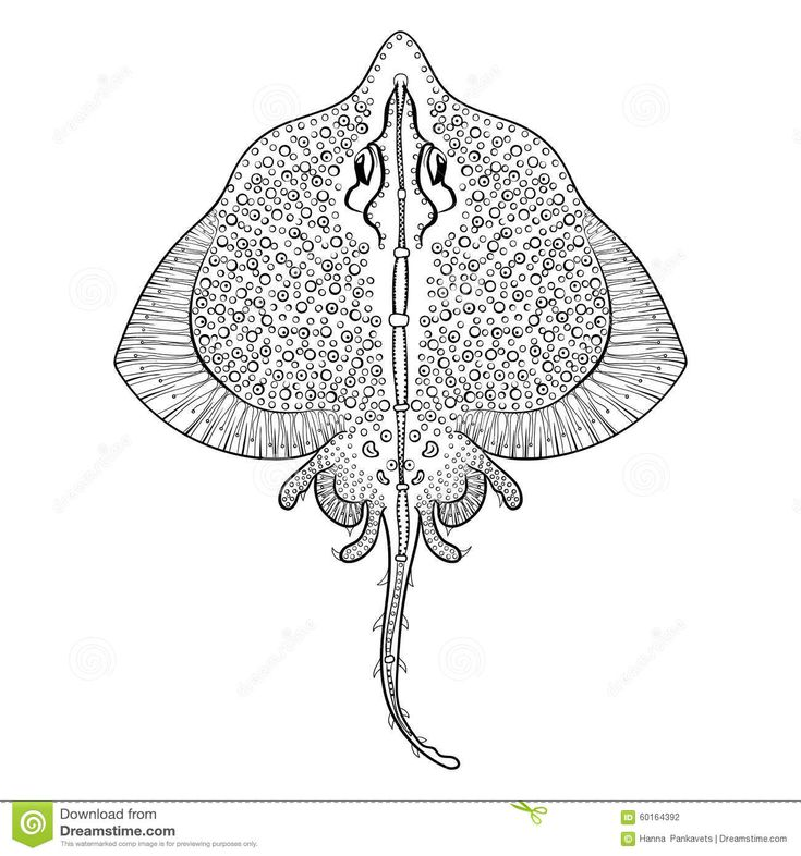 related image zentanglecoloring - Stingray Coloring Pages Printable