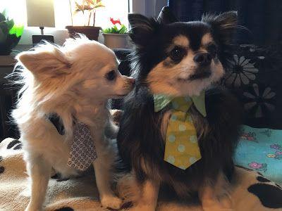 Diva und Gent Dogfashion: Die Liga der Gentlemen