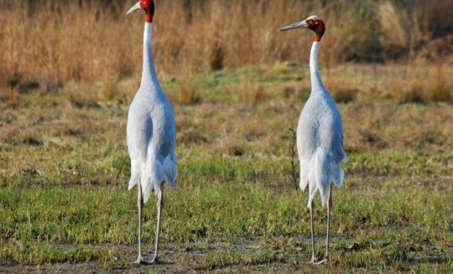 'No bird flu symptoms in migratory birds at Gurgaon sanctuary'