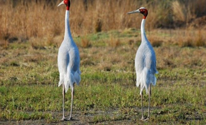 'No bird flu symptoms in migratory birds at Gurgaon sanctuary'