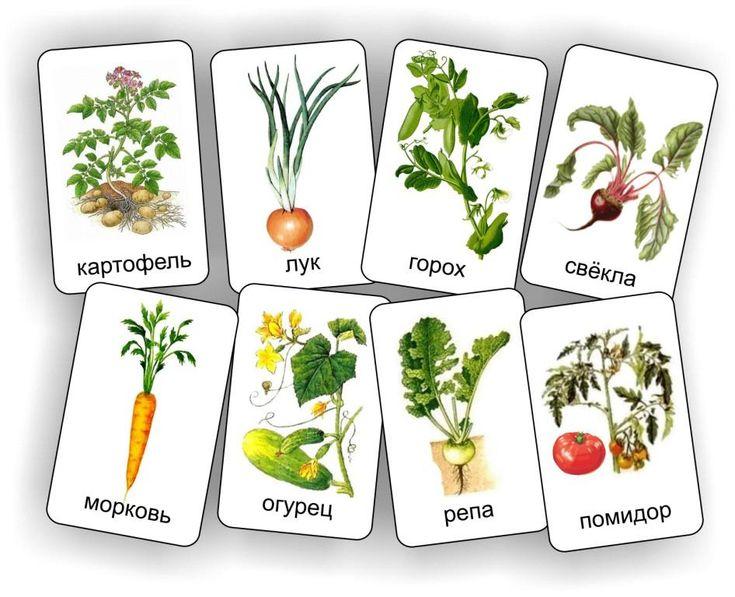 овощное домино 2