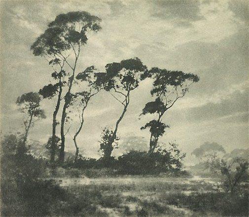 Winter's light by Harold Cazneaux, ca 1923, Australia