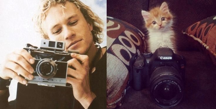 34 Photos Of Sexy Male Celebrities vs Cats Striking Similar Poses  Who Posed It Better