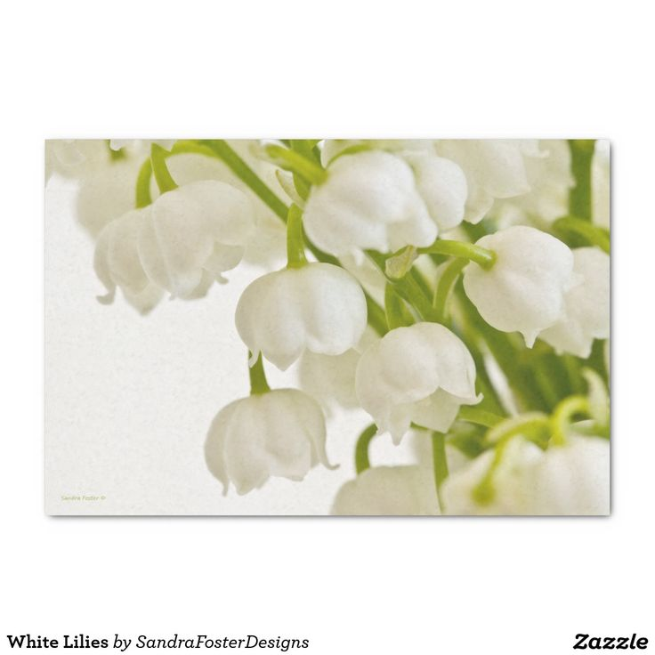 "White Lilies 10"" X 15"" Tissue Paper"
