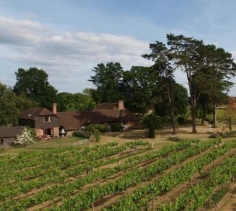 Brightwell vineyard is just five minutes' drive from The Old Post Office, Wallingford