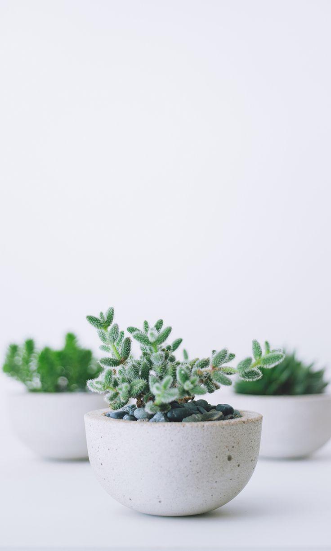 Succulents in concrete planters