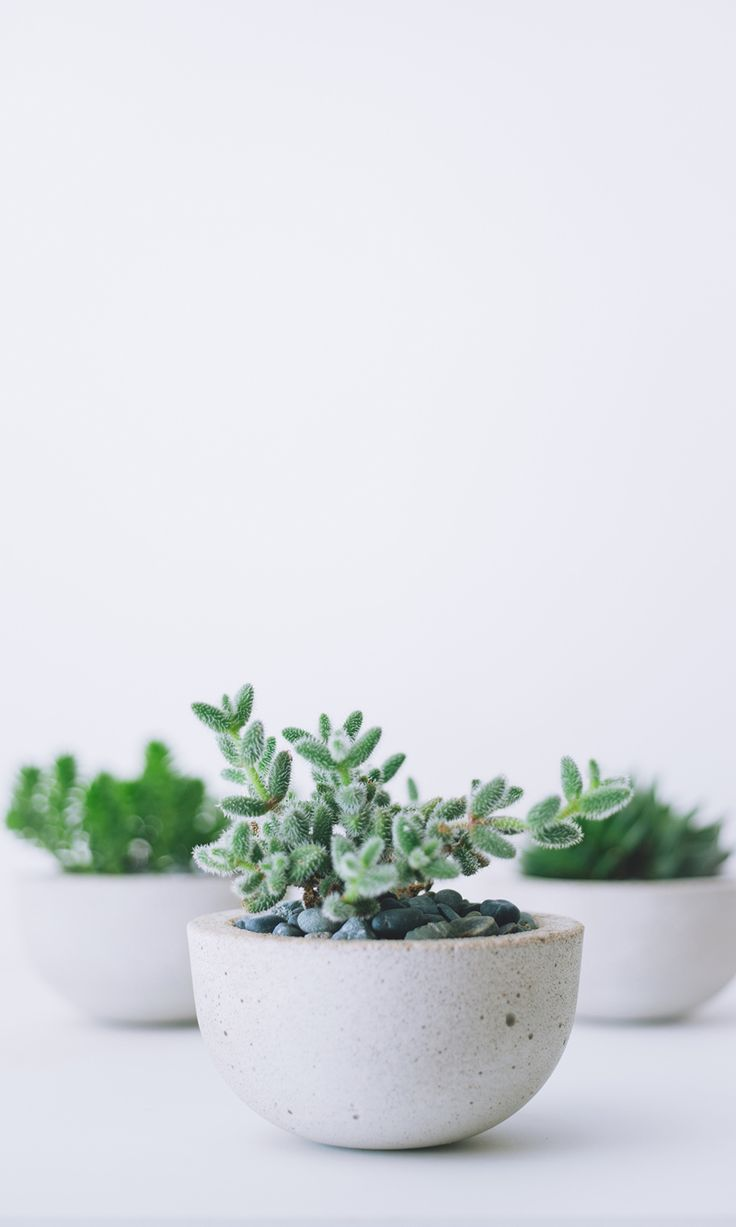 Succulents in concrete planters