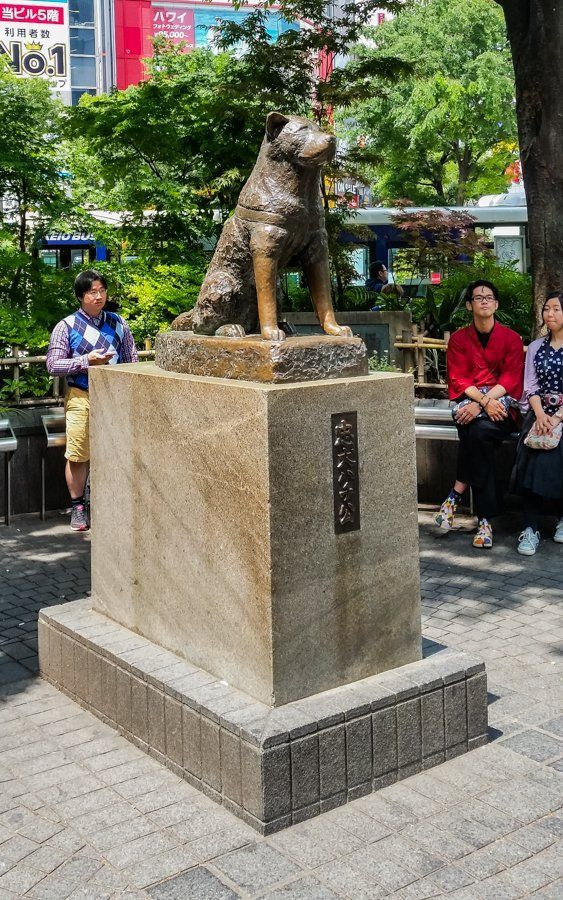 Famous Hachiko dog statue| What to do in Shibuya? Neighbourhood Guide Tokyo, Japan || The Travel Tester: ||