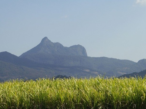 Mt Warning - the first place the sun hits in Oz - as seen from the Murbah cane fields.