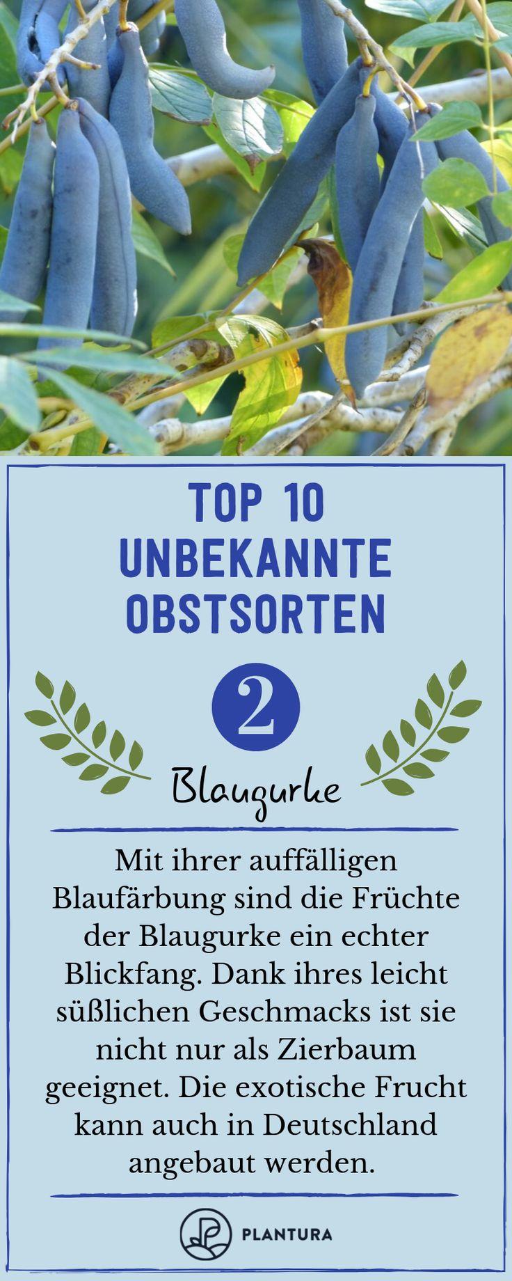 Unbekannte Obstsorten: 10 ungewöhnliche & exotische Sorten