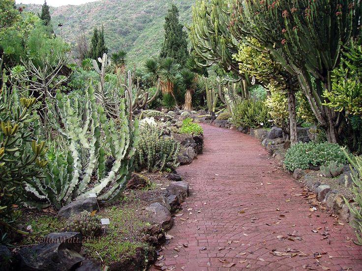 16 best la landscapes green technology images on pinterest paisajes green technology and - Jardin botanico canario ...