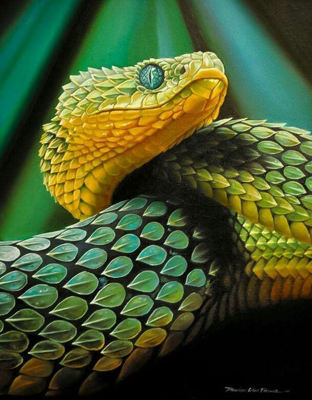 Snake – um dos cinco venenos da tradição chinesa – é um aliado do dragão Pin …   – Reptilien