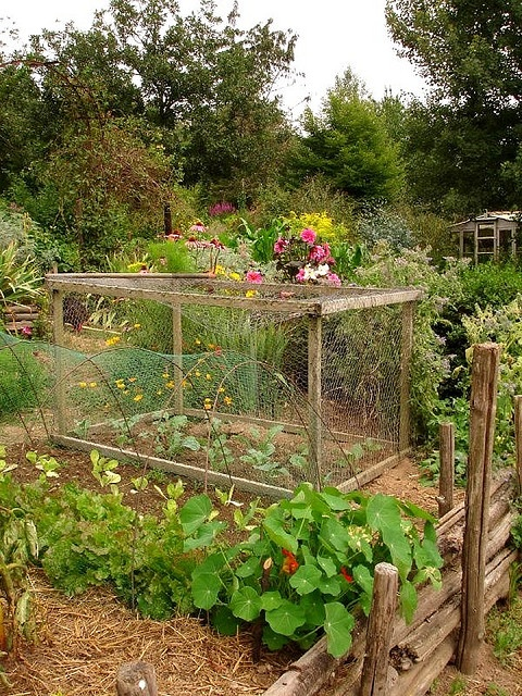 FEED the Family: vegetable garden with netting to keep the chickens out   jardin potager   bauerngarten   köksträdgård