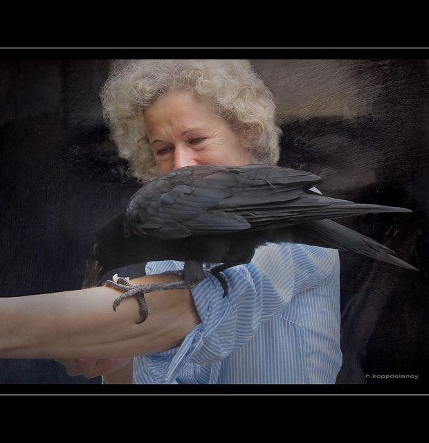 """Alice is feeding Hank  Can you see the spirit of the Raven in the background?  Dedicated to happy AlicePopkorn    HKD  Alice füttert Hank. Er hat gesehen, wie sie mit einer Tüte frischer Brötchen vom Bäcker aus dem Wagen stieg. Er bat um sofortige Bedienung. Ich kam gerade aus dem Haus und hatte endlich einmal die Kamera dabei…    Herzlichen Glückwunsch zum spielerischen Umgang mit der """"Unterwelt""""!   HKD    Geschichten vom Raben  Hank ist viel mehr als clever und gerissen, er ist der…"""
