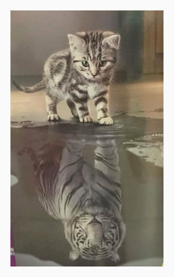 Mosaic Pictures Cat Looking In Mirror And Sees Lion