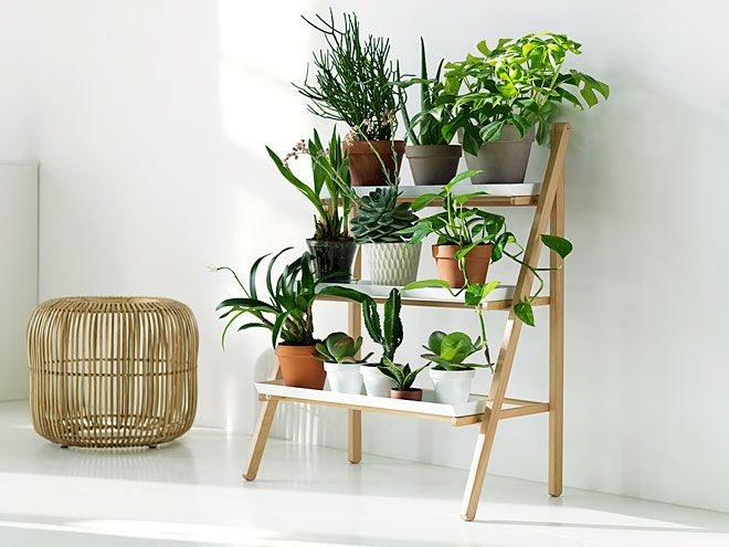 Miss Moss : Kekkilä green light nursery shelves