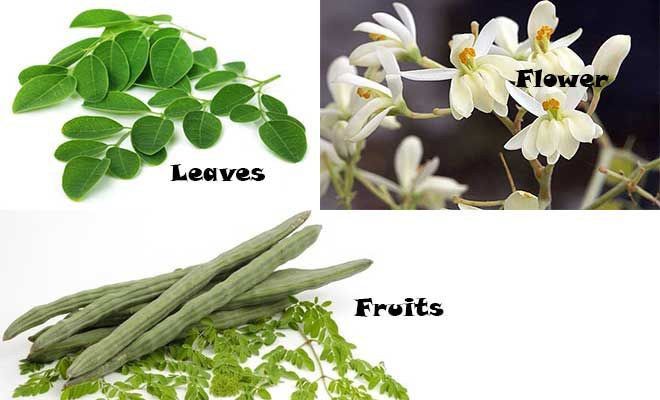 Moringa Oleifera Leaves Flower And Fruits Moringa Medicinal Plants Types Of Flowers