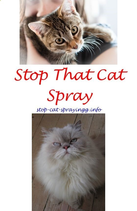 what to spray to stop cats from peeing male cat spraying cat urine rh pinterest com