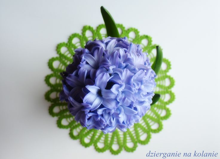 Wszystko jest kwestią perspektywy. Serwetka o średnicy 30 cm + hiacynt/Crocheted Doily and hyacinth.