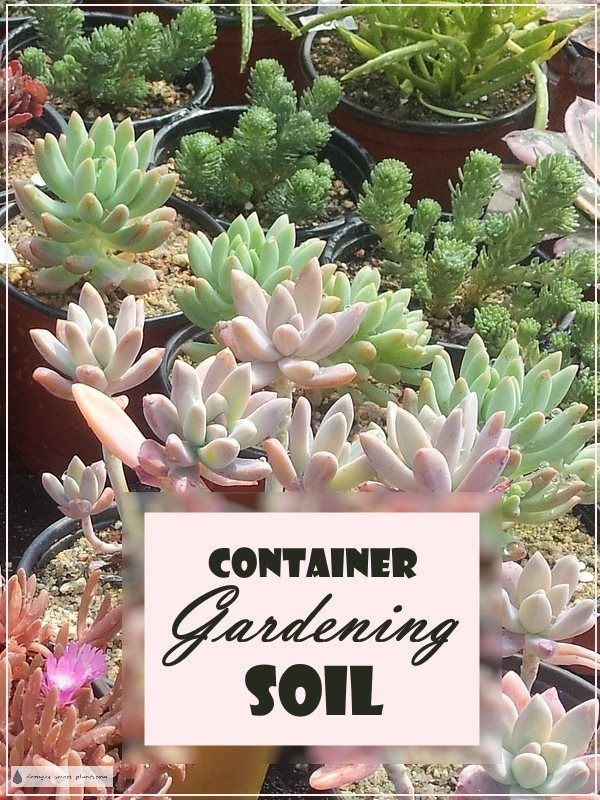 Container Gardening Soil   Water Retentive, Yet Well Drained