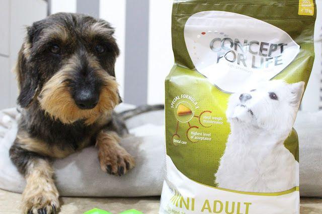 Con Perros y a lo loco | Vida perruna | Dogs & Lifestyle: Concept for Life