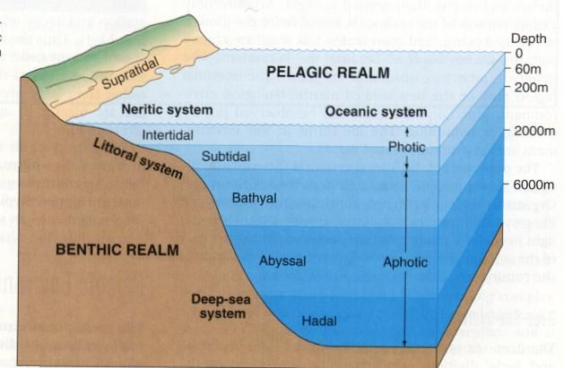 17 Best Images About Ocean Floor On Pinterest The
