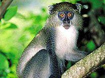 Oribi Gorge Nature Reserve