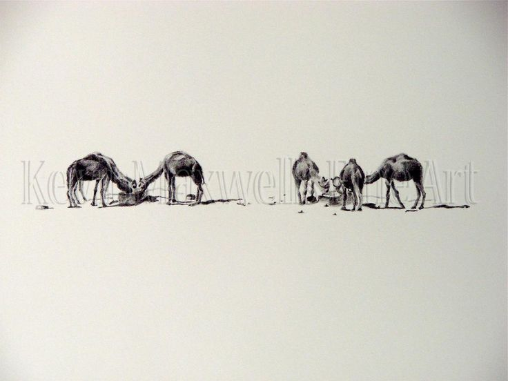 6 camels SOLD