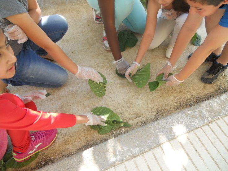 """L'escola El Temple participa en la Setmana del Voluntariat, del 30 de maig al 5 de juny, fent alguns """"Petits grans gestos"""" com són el netejar el pati de l'escola i l'hort escolar."""
