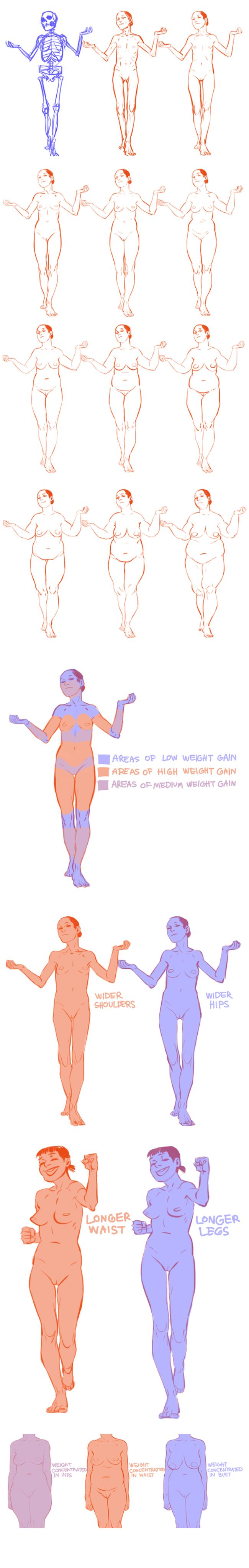 Varying your body types (female anatomy, fat distribution) by dredsina