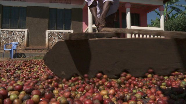 Ending extreme poverty in Africa - BBC News