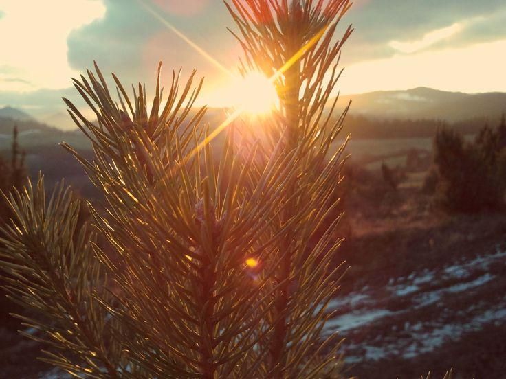 sunset, sunshine, tree, good walk on PicsSAE  http://picssae.com?social-gallery-image=amazing-sunset