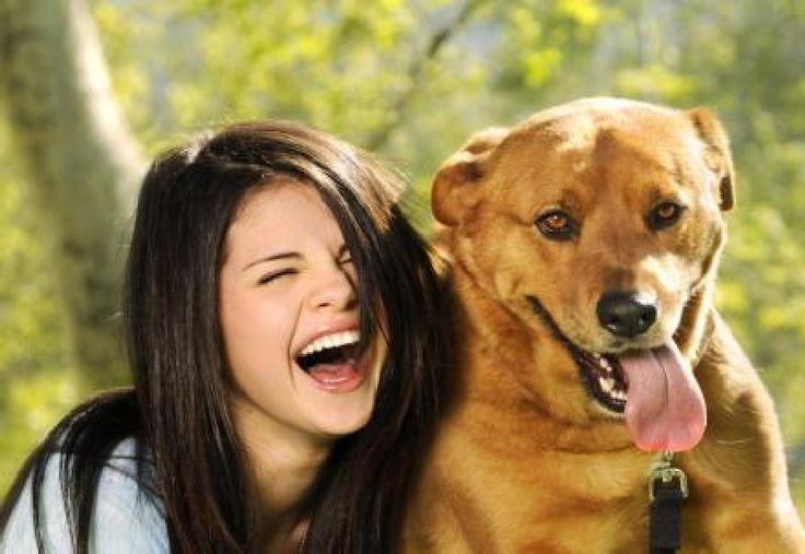 Online Dog Training System