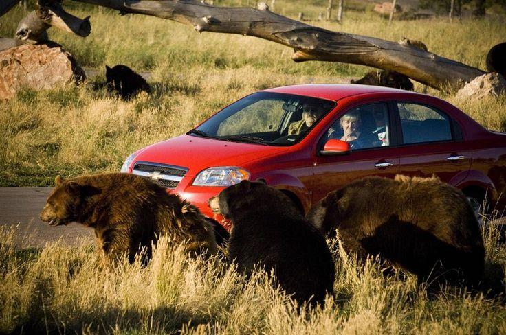 Bear Country USA, Rapid City, SD