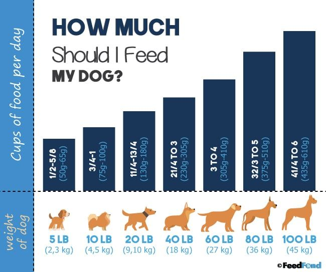 How Much Should I Feed My Dog Puppy To Senior Feeding Guides