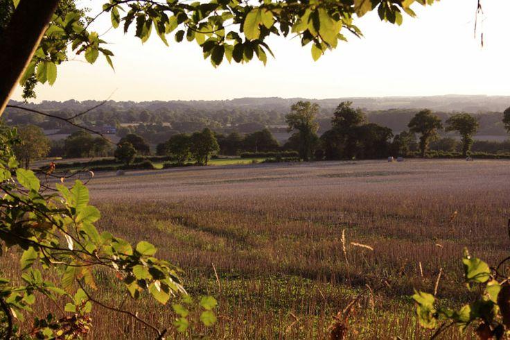 Prachtig uitzicht van lavendelvelden in de omgeving van Juignac