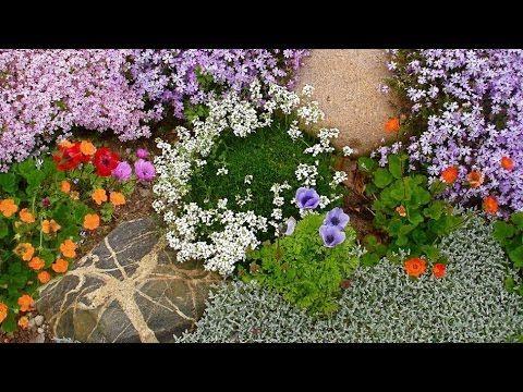 Как использовать в оформлении сада почвопокровные растения