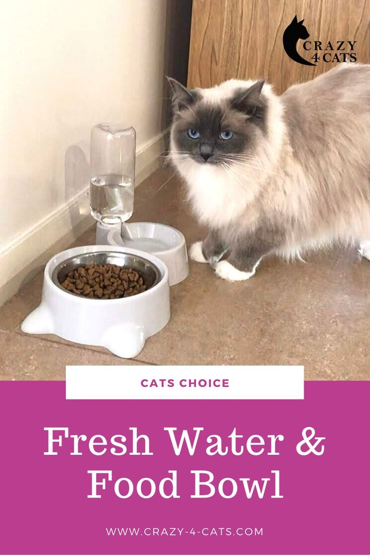 Looking For Cat Bowl Ideas Check Out This Feeding Bowl With Water Bottle In 2020 Best Cat Food Cat Bowls Fresh Drinks