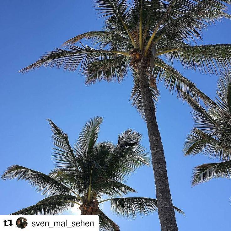 Credit to @sven_mal_sehen  Heute zum Jahreswechsel ist das Wetter hier mal wieder der Hammer  nachdem es gestern nicht so schön gewesen ist und vor allem war es kalt #beach #sun  #holiday #newyear #followme     #HollywoodTapFL #HollywoodFL #HollywoodBeach #DowntownHollywood #HardRockHolly #Miami #FortLauderdale #FtLauderdale #Dania #Davie #DaniaBeach #Aventura #Hallandale #HallandaleBeach #PembrokePines  #Miramar #CooperCity #Plantation #SunnyIsles #MiamiGardens #NorthMiamiBeach #Broward