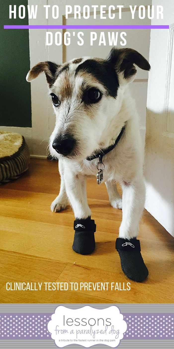 Paw Protection For Your Dog S Dragging Feet Dog Clicker Training