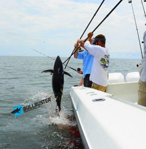 Gaff_Shot_On_A_Venice_Louisiana_Yellowfin_Tuna