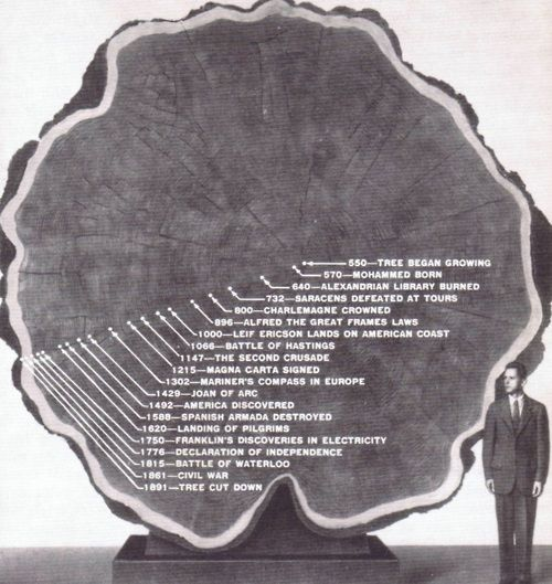 This is what i think of every time i see a tree cut down. To touch a tree is to touch a bit of history.