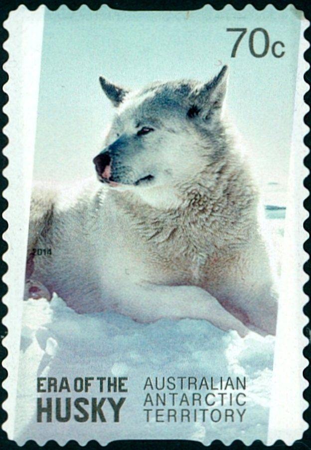 Stamp: White Husky (Canis lupus familiaris) (Australian Antarctic Territory (AAT)) (Era of the husky) Mi:AQ 226,Yt:AQ 223,Sg:AQ 246