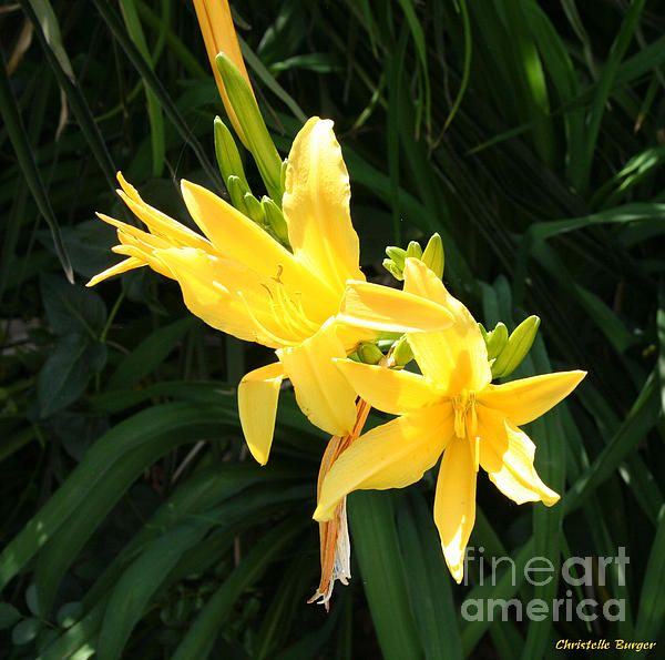 low Flower Photograph by Christelle Burger - Yellow Flower Fine Art Prints and Posters for Salefineartamerica.com