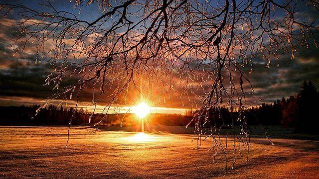 Goodnight😘 #natur #nature #skog #forest #träd #trees #sol #sun #solnedgång #sunset #himmel #sky #moln #clouds #kväll #evening #färger #colors #skugga #shadow #blå #blue #svart #black #orange