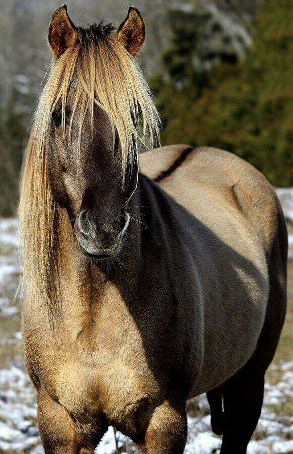 Мои одноклассники, картинки с красивыми лошадьми с большими кривыми