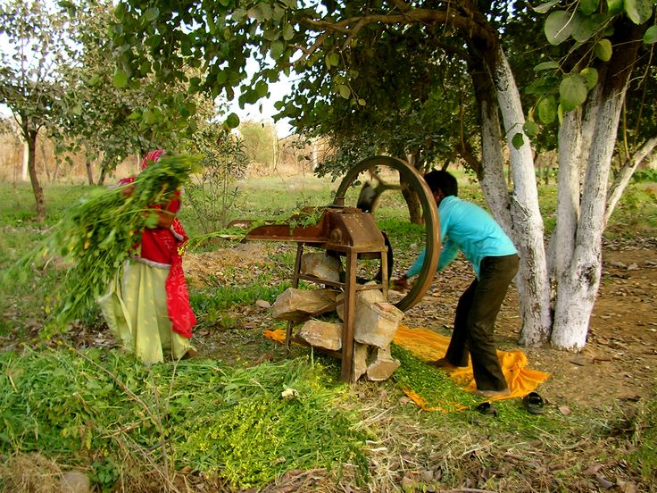 Village Culture Olden (Eco Friendly) & Best Ways of Life