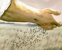 Image result for sowing seeds
